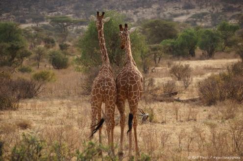 Samburu_2 (80)