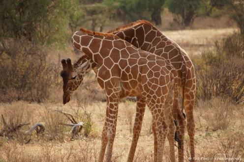 Samburu_2 (81)