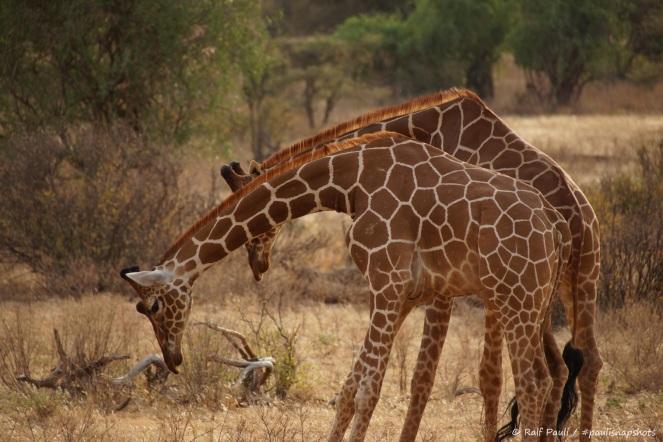 Samburu_2 (82)
