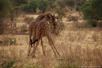 Samburu_2 (84)