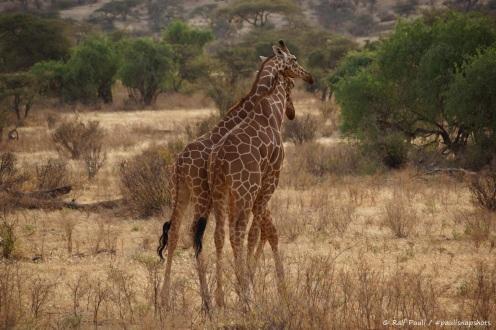 Samburu_2 (85)