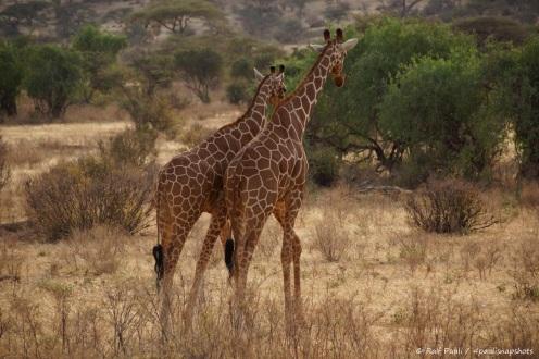 Samburu_2 (86)