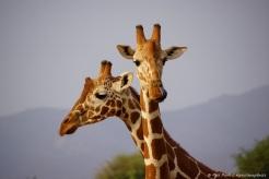 Samburu_2 (88)