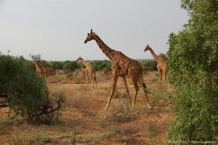 Samburu_2 (90)
