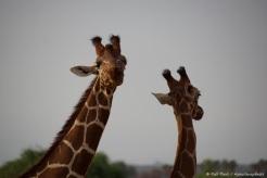 Samburu_2 (91)