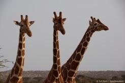 Samburu_2 (92)