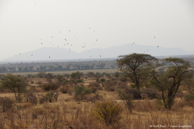 Samburu_2 (95)