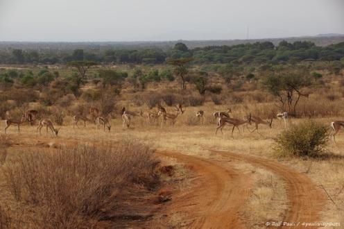 Samburu_2 (98)